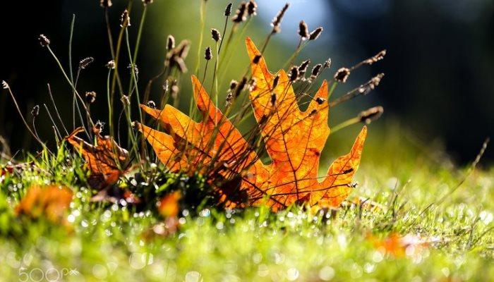 Лекарственные травы осени и их применение в народной медицине